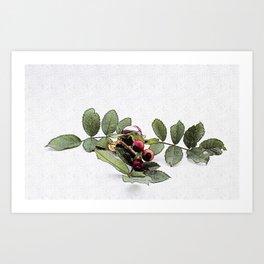 Chestnut (Castanea/ Rowan Art Print