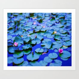Water lilies in a pond Art Print