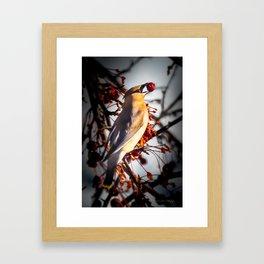 Cedar Waxwing Framed Art Print
