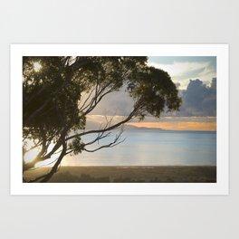 Hillside view of Santa Cruz Island Art Print