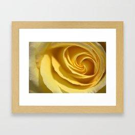 Creme de Rose  1213 Framed Art Print