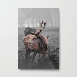 Red deer in the winter forest black and white portrait Metal Print