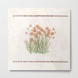 Flowering Scabiosa Metal Print