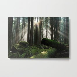 sun rays in the forest  Metal Print