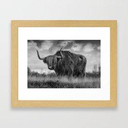 Highland Scottish Cow Framed Art Print