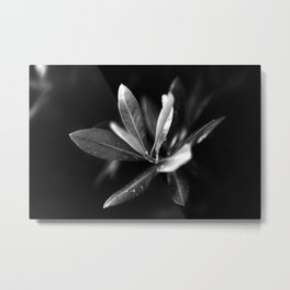 olive leaves Metal Print