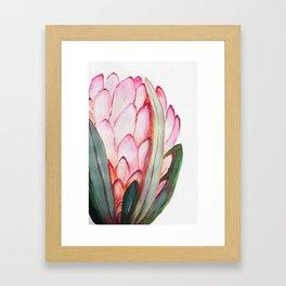 Pink large protea, botanical illustration Framed Art Print