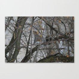 Squirrel !  Canvas Print