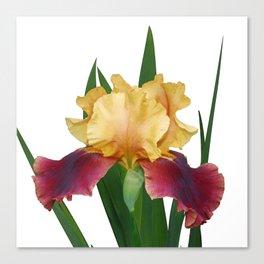 Iris 'Supreme Sultan' Canvas Print