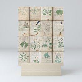 The Voynich Manuscript Quire 1 - Natural Mini Art Print