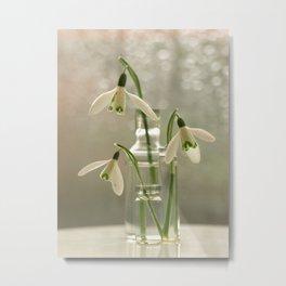 Snowdrop Flowers... Metal Print