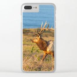 Tule Elk Bull Clear iPhone Case