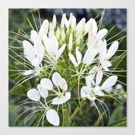 WHITE MAGIC BLOSSOMS Canvas Print