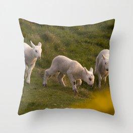 three little lambs Throw Pillow