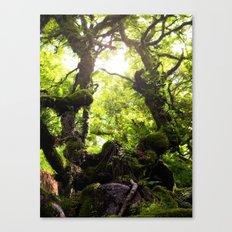 Wistman's Wood Canvas Print