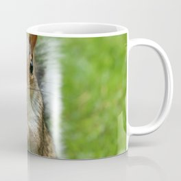 Sciurus-carolinensis Coffee Mug