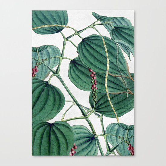 Green leaves I Canvas Print