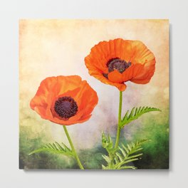 Two beautiful poppies with textures Metal Print