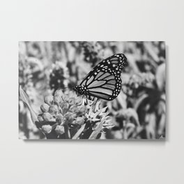Butterfly kisses in Black and White  Metal Print