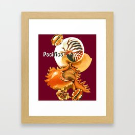 Pacifica 1 - South Pacific Seashells Framed Art Print