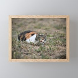 Multicolor cat is playing hide and seek Framed Mini Art Print