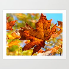 First Leaf of Fall Art Print