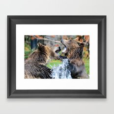 Sparring Grizzly Bears Framed Art Print