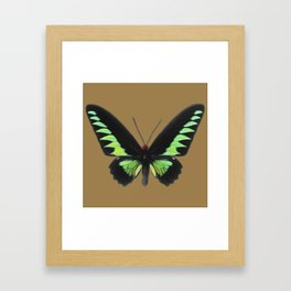 Rajah Brooke Birdwing Framed Art Print