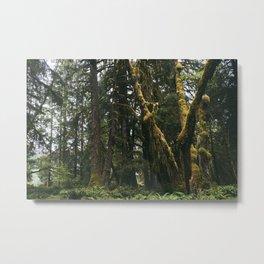 Rainforest Moss Metal Print