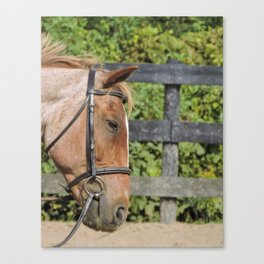 Spotted by a strawberry roan Canvas Print