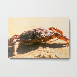 Crab on The Beach Photograph Metal Print