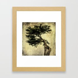 Cypress Tree Framed Art Print