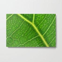 Leaf structure Metal Print