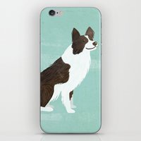 border collie iPhone & iPod Skins featuring Border Collie by 52 Dogs