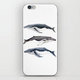 Humpback whales iPhone Skin