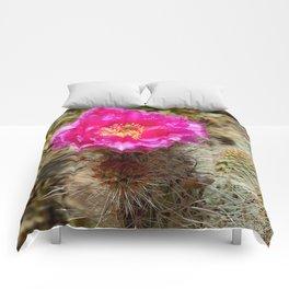 Hedgehog Cactus In Bloom Comforters