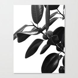 Ficus Elastica Black & White Vibes #1 #foliage #decor #art #society6 Canvas Print