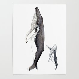 North Atlantic Humpback whale with calf Poster