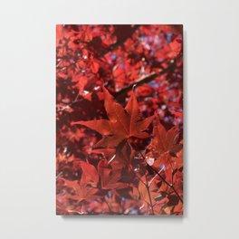 Oh Sweet Maple Metal Print