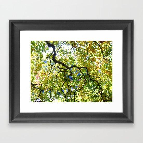Arboretum Tree Framed Art Print