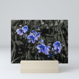 Little blue flowers on black background Mini Art Print