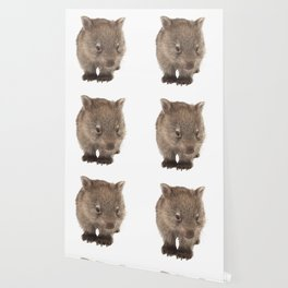 An adorable Australian wombat Wallpaper