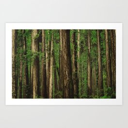 Sitting in the Forest Art Print