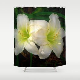 Glowing white daylily flowers - Hemerocallis Indy Seductress Shower Curtain