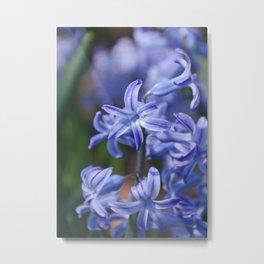 AFE Blue Hyacinth Metal Print