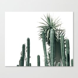 Desert Botanicals Canvas Print