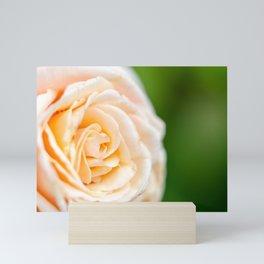 Creamy Rose Mini Art Print