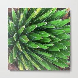 Dramatic Sophisticated Cactus Art Photo Metal Print