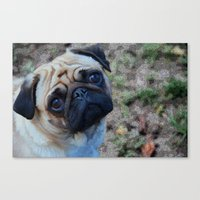 pug Canvas Prints featuring Pug by Crayle Vanest