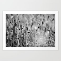 Once in the meadow - photography black&white Art Print